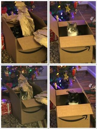 1box4cats