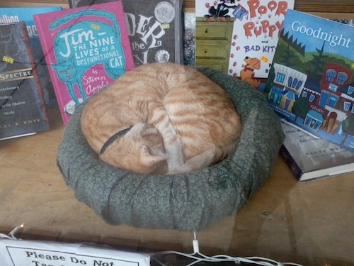 chapel hill bookstore cat